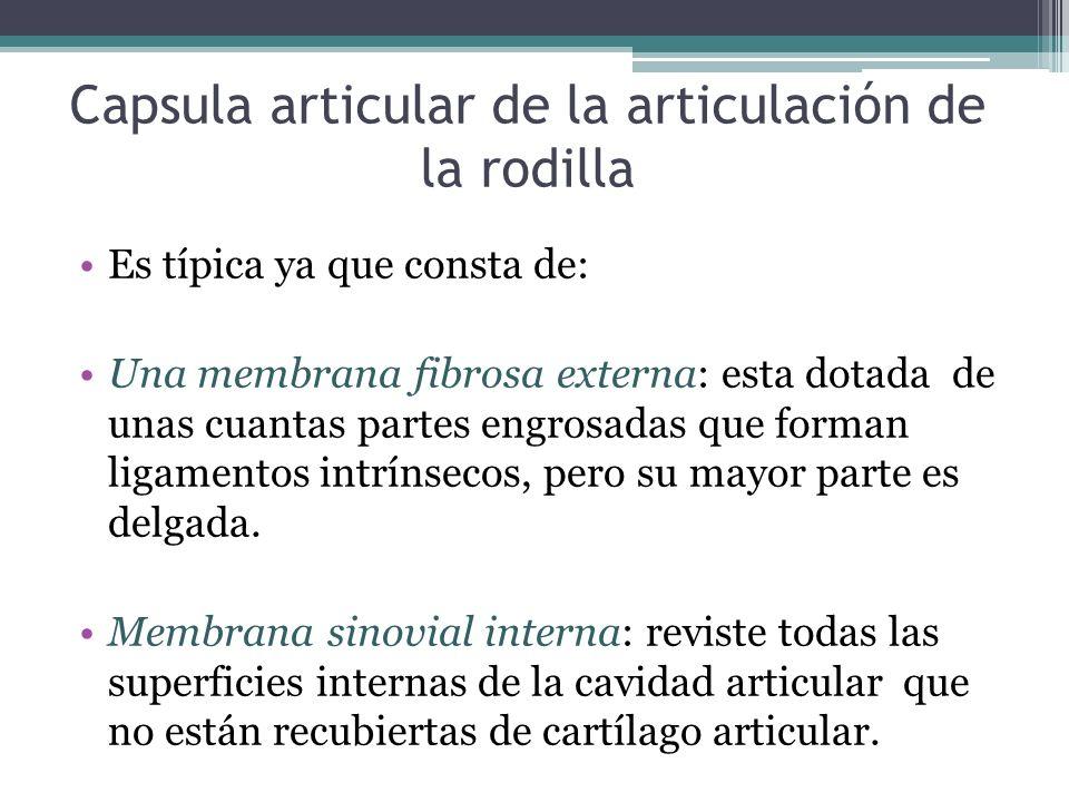 Capsula articular de la articulación de la rodilla