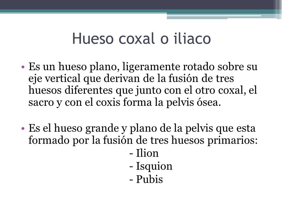 Hueso coxal o iliaco