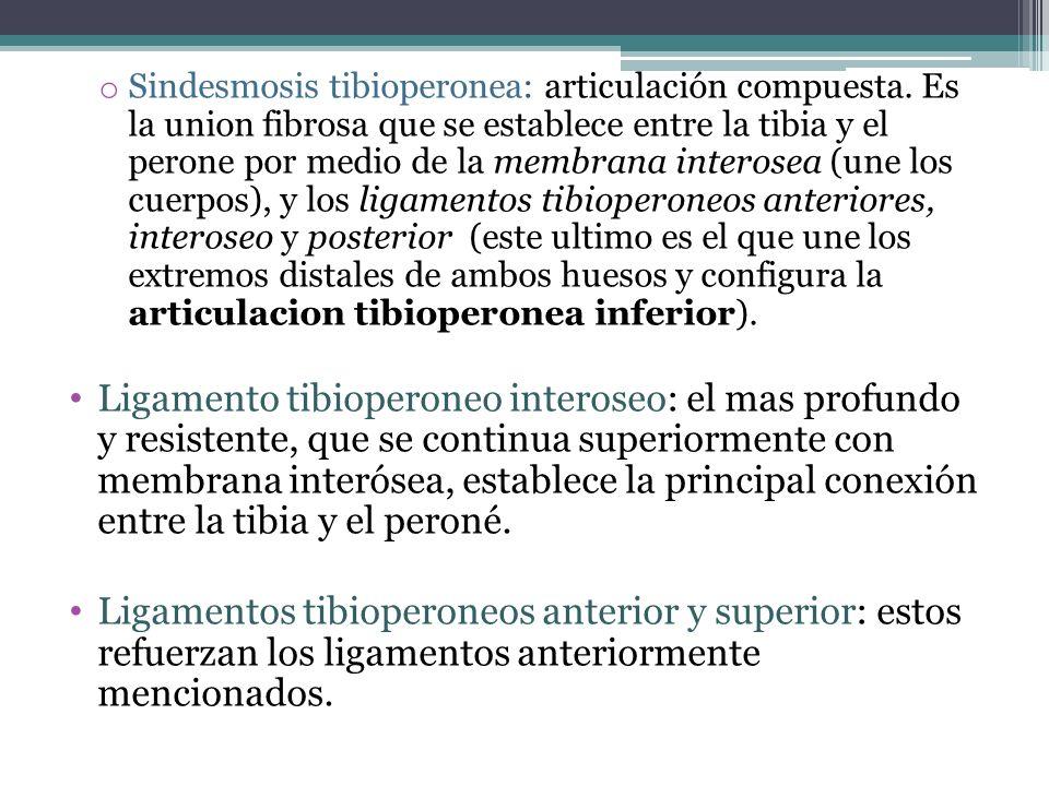 Sindesmosis tibioperonea: articulación compuesta