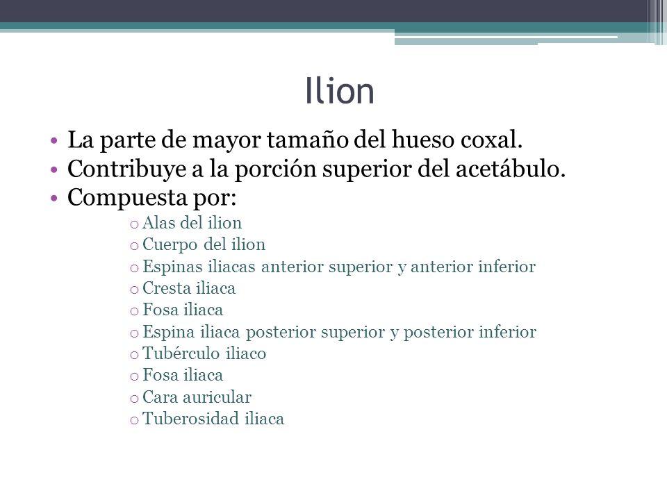 Ilion La parte de mayor tamaño del hueso coxal.