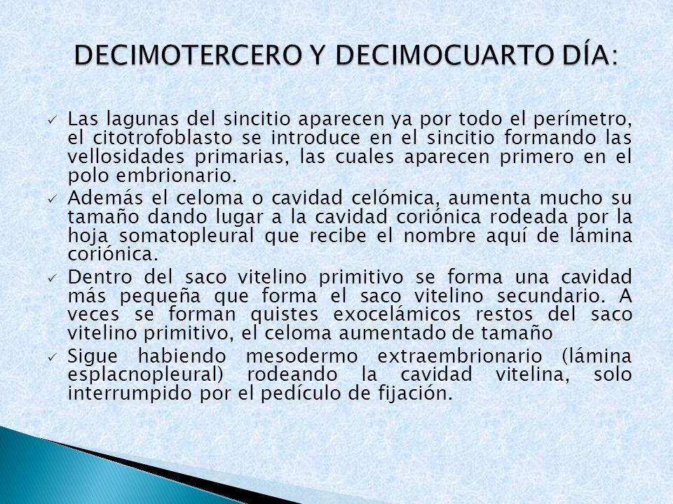 DECIMOTERCERO Y DECIMOCUARTO DÍA: