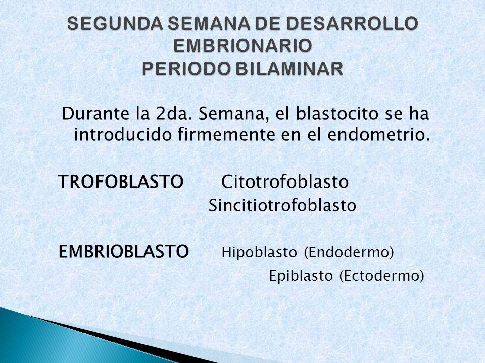 SEGUNDA SEMANA DE DESARROLLO EMBRIONARIO PERIODO BILAMINAR