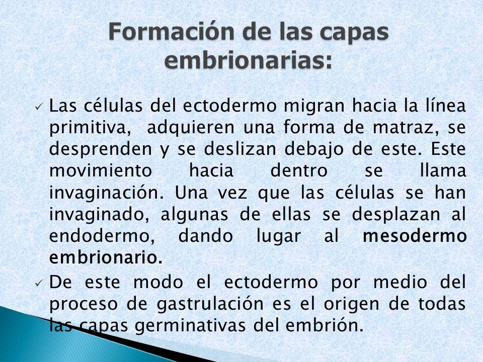 Formación de las capas embrionarias: