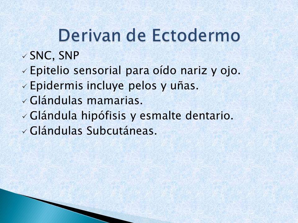 Derivan de Ectodermo SNC, SNP
