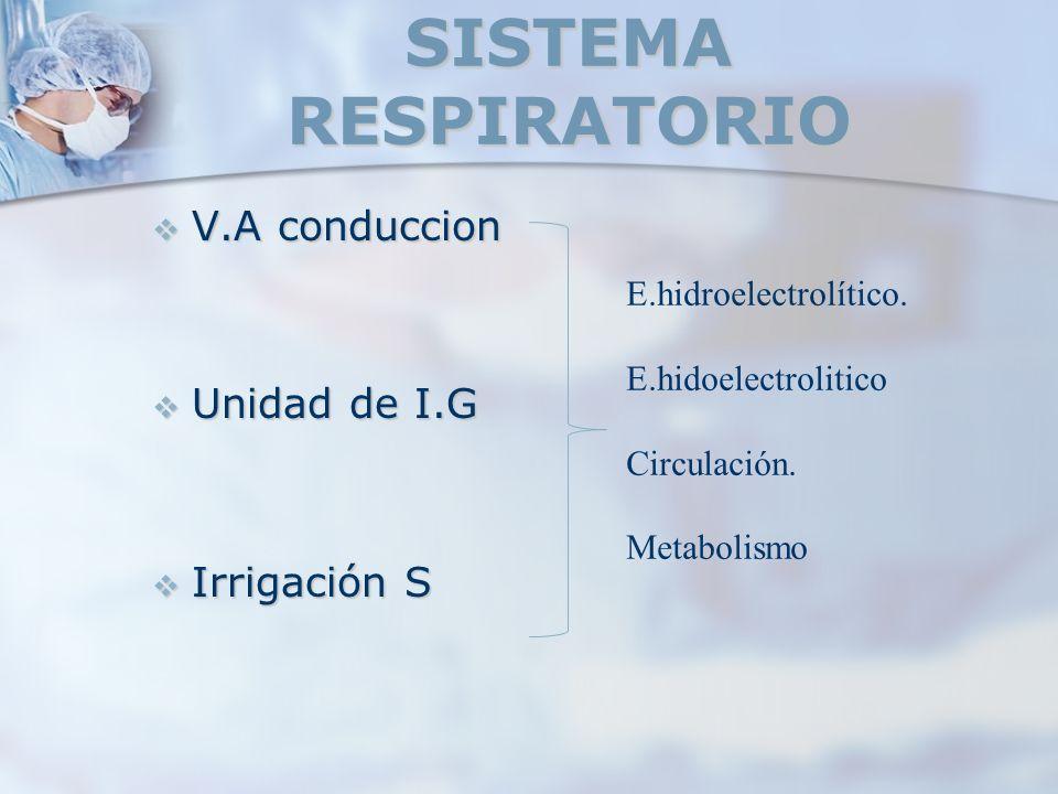 SISTEMA RESPIRATORIO V.A conduccion Unidad de I.G Irrigación S