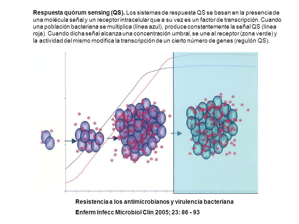 Respuesta quórum sensing (QS)