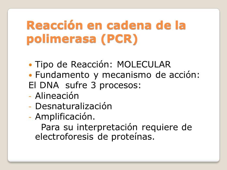 Reacción en cadena de la polimerasa (PCR)