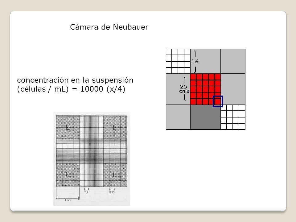 Cámara de Neubauer concentración en la suspensión (células / mL) = 10000 (x/4)