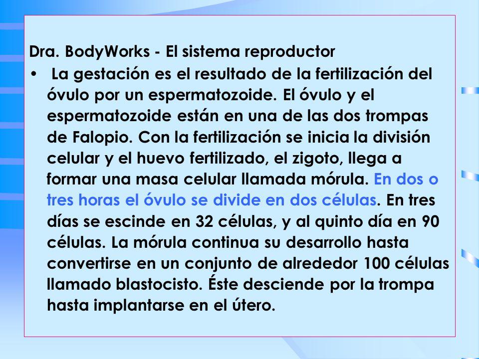 Dra. BodyWorks - El sistema reproductor
