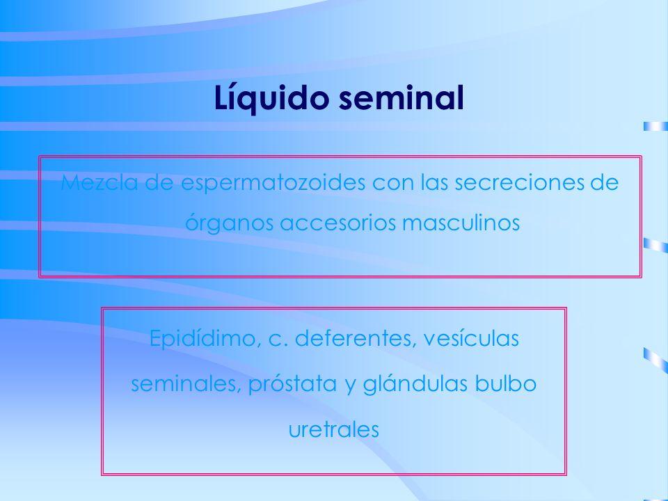 Líquido seminal Mezcla de espermatozoides con las secreciones de órganos accesorios masculinos.
