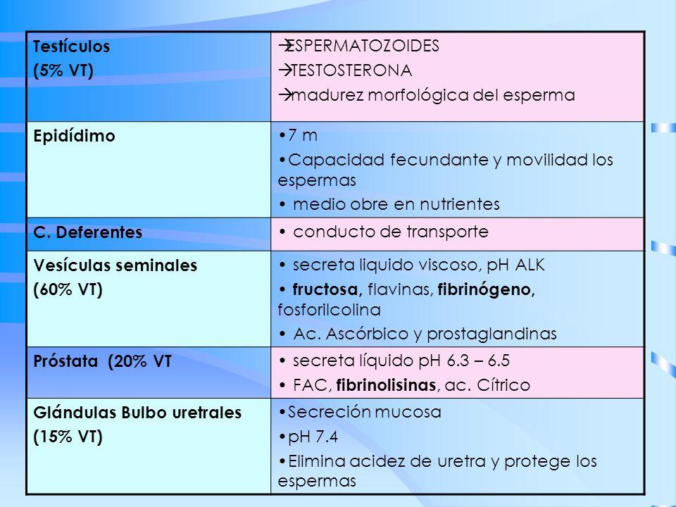 Testículos(5% VT) ESPERMATOZOIDES. TESTOSTERONA. madurez morfológica del esperma. Epidídimo. 7 m. Capacidad fecundante y movilidad los espermas.