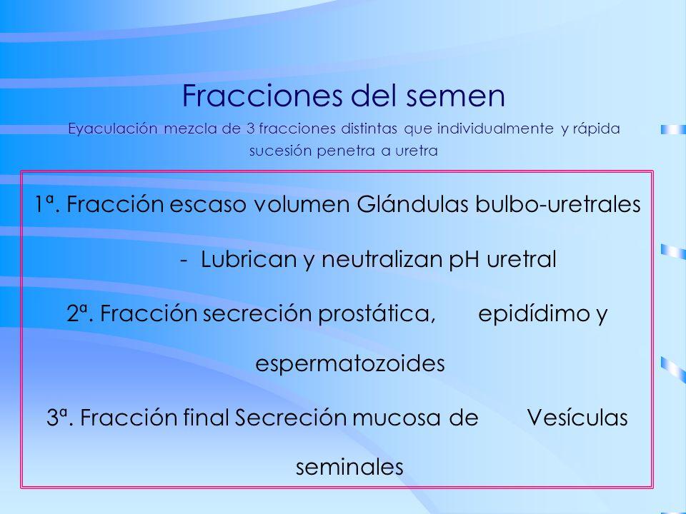 Fracciones del semen Eyaculación mezcla de 3 fracciones distintas que individualmente y rápida sucesión penetra a uretra