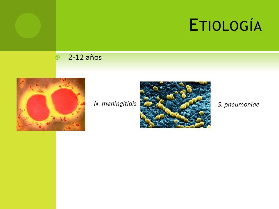 Etiología 2-12 años N. meningitidis S. pneumoniae
