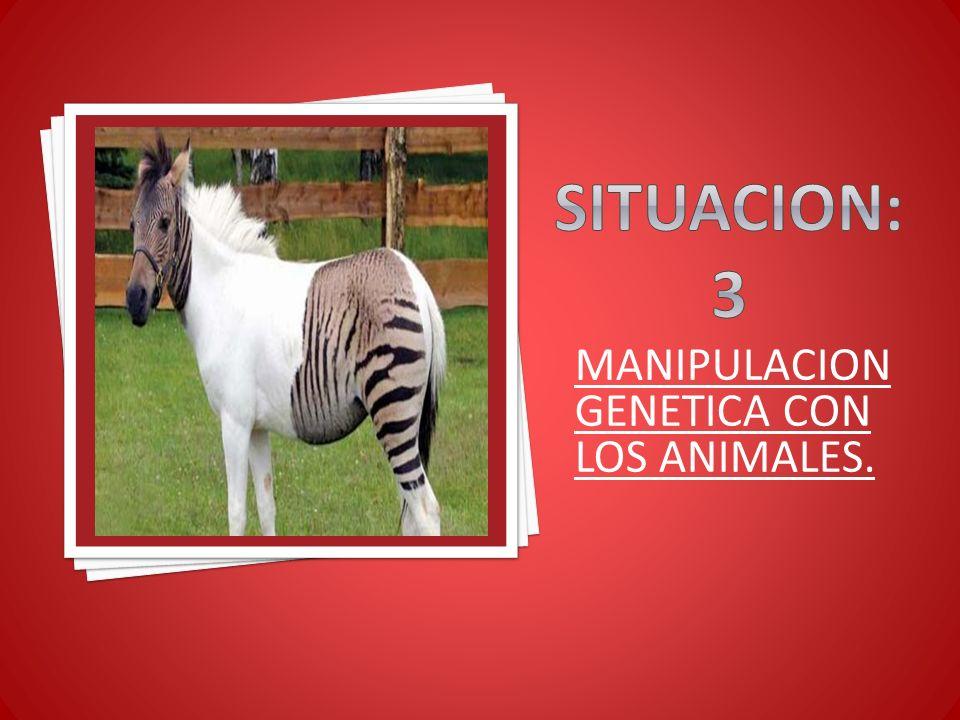 Situacion:3 MANIPULACION GENETICA CON LOS ANIMALES.