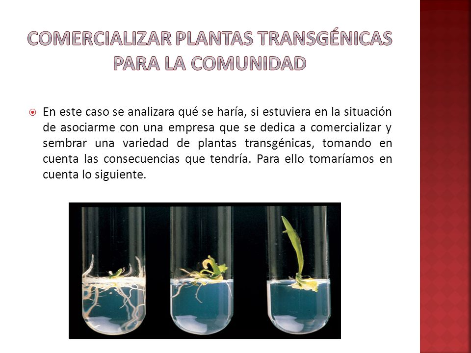 Comercializar Plantas Transgénicas Para La Comunidad
