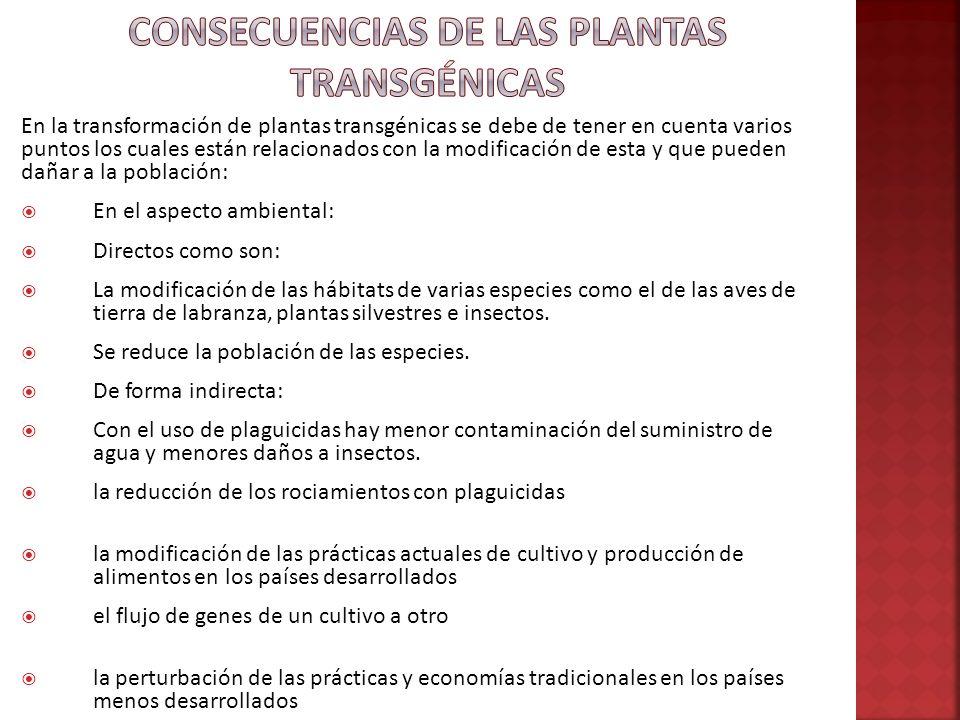 Consecuencias de las plantas transgénicas