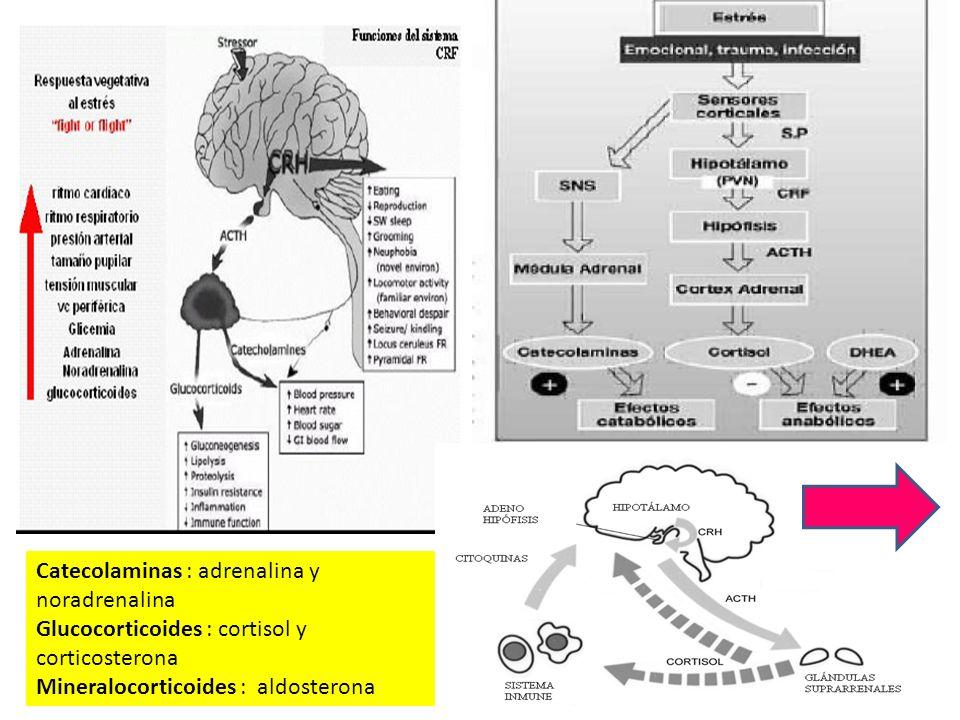 Catecolaminas : adrenalina y noradrenalina