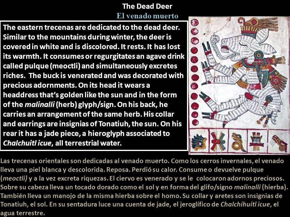 The Dead Deer El venado muerto