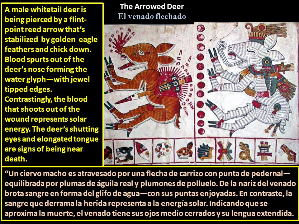 The Arrowed Deer El venado flechado.