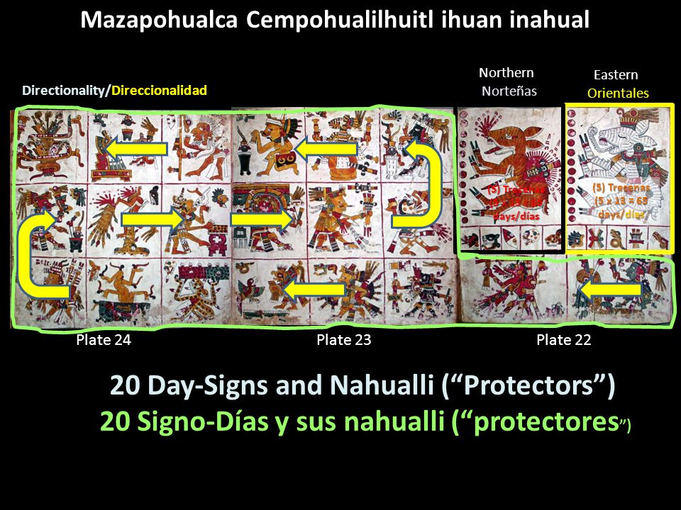 20 Day-Signs and Nahualli ( Protectors )