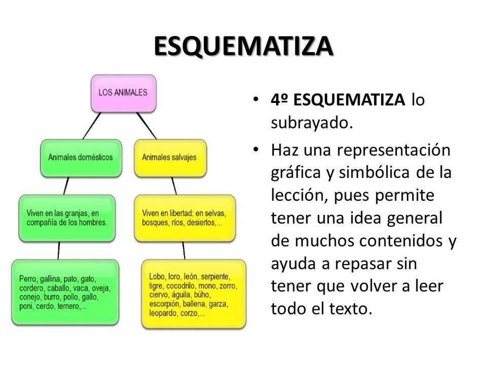 ESQUEMATIZA 4º ESQUEMATIZA lo subrayado.