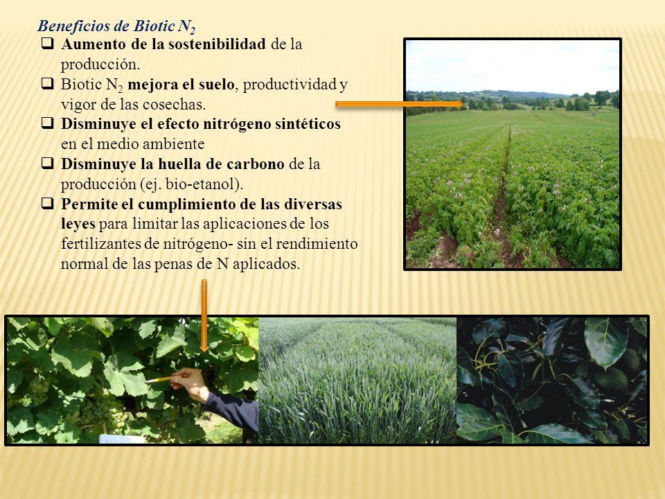 Beneficios de Biotic N2 Aumento de la sostenibilidad de la producción. Biotic N2 mejora el suelo, productividad y vigor de las cosechas.