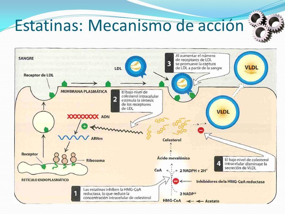 Estatinas: Mecanismo de acción