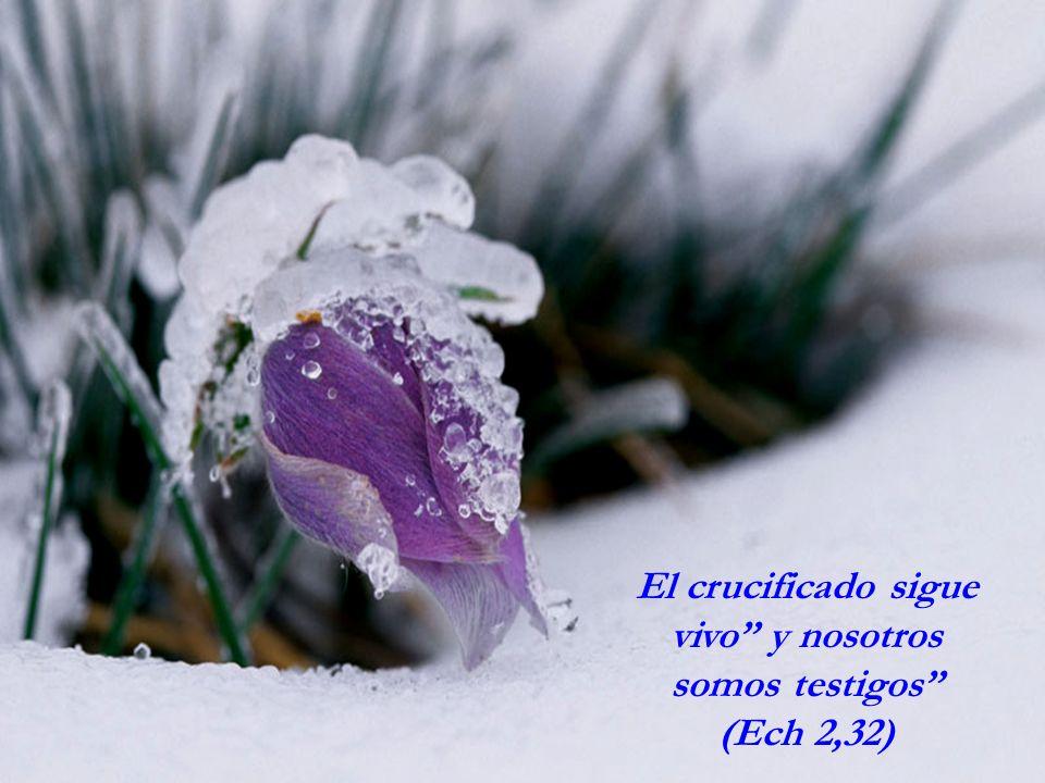 El crucificado sigue vivo y nosotros somos testigos (Ech 2,32)