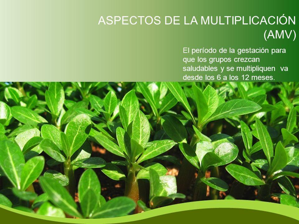 ASPECTOS DE LA MULTIPLICACIÓN (AMV)