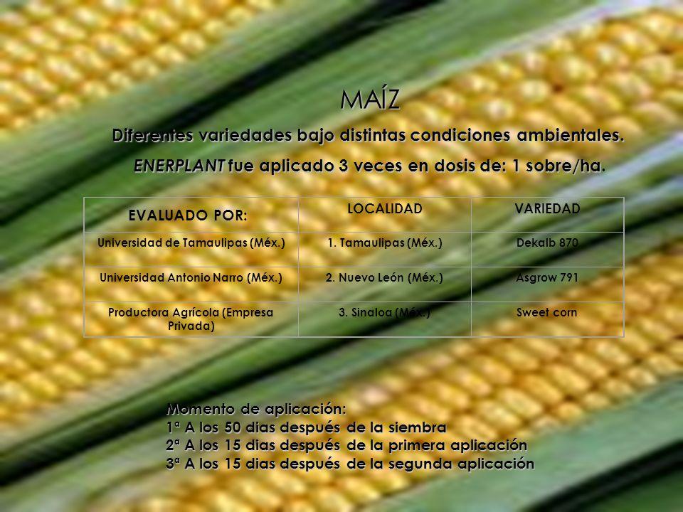 MAÍZ Diferentes variedades bajo distintas condiciones ambientales.