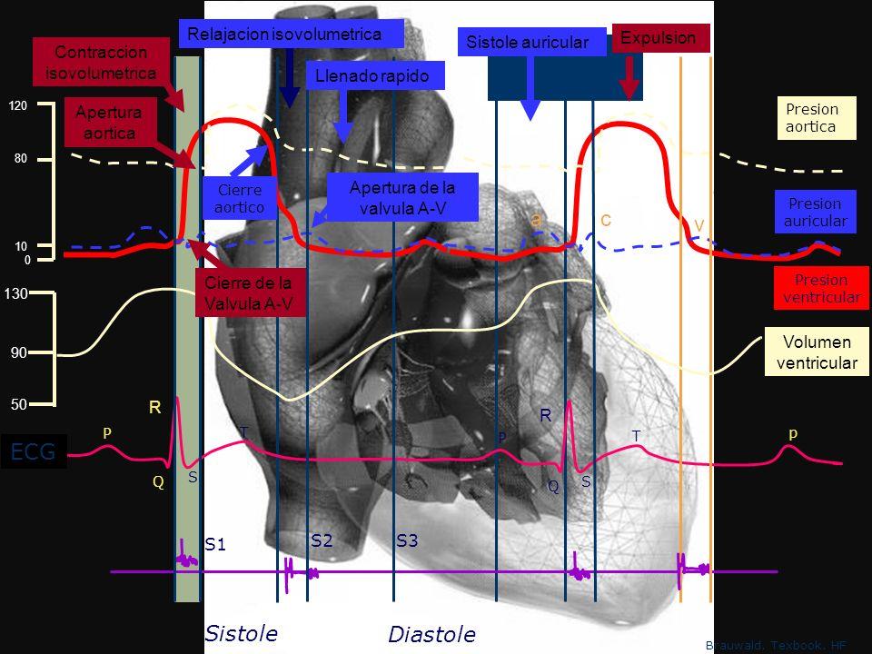 a c v ECG Sistole Diastole Relajacion isovolumetrica Sistole auricular