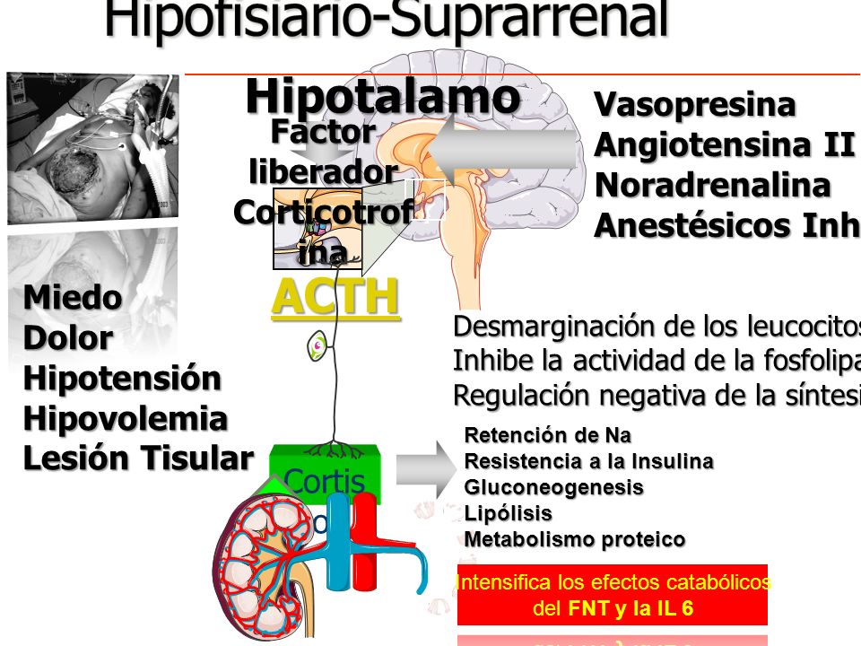 Eje Hipotalamo – Hipofisiario-Suprarrenal