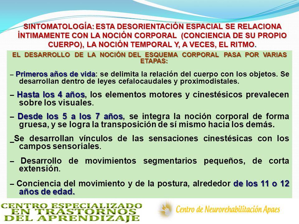 SINTOMATOLOGÍA: ESTA DESORIENTACIÓN ESPACIAL SE RELACIONA ÍNTIMAMENTE CON LA NOCIÓN CORPORAL (CONCIENCIA DE SU PROPIO CUERPO), LA NOCIÓN TEMPORAL Y, A VECES, EL RITMO.