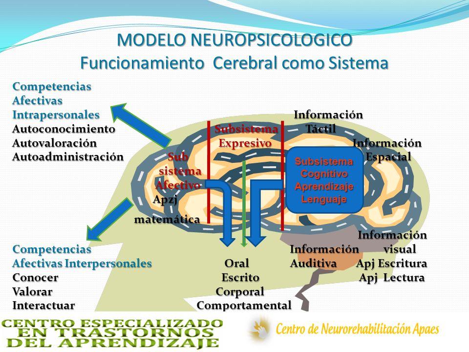 MODELO NEUROPSICOLOGICO Funcionamiento Cerebral como Sistema