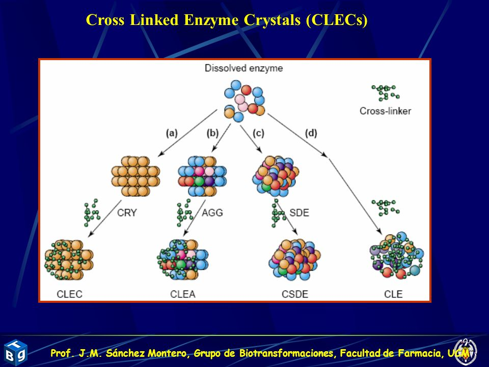Cross Linked Enzyme Crystals (CLECs)