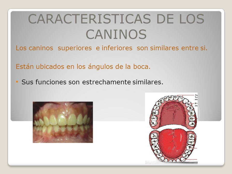 CARACTERISTICAS DE LOS CANINOS