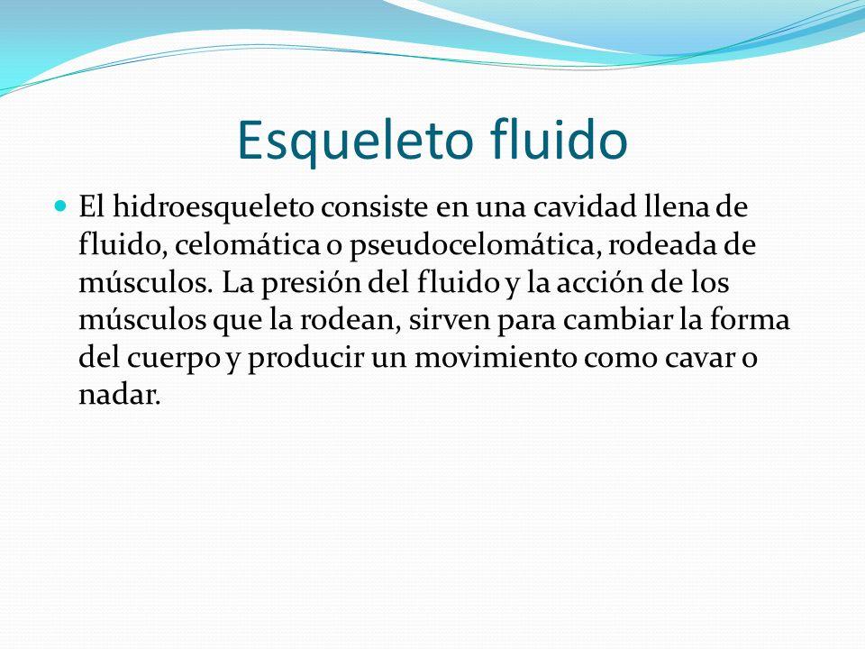 Esqueleto fluido