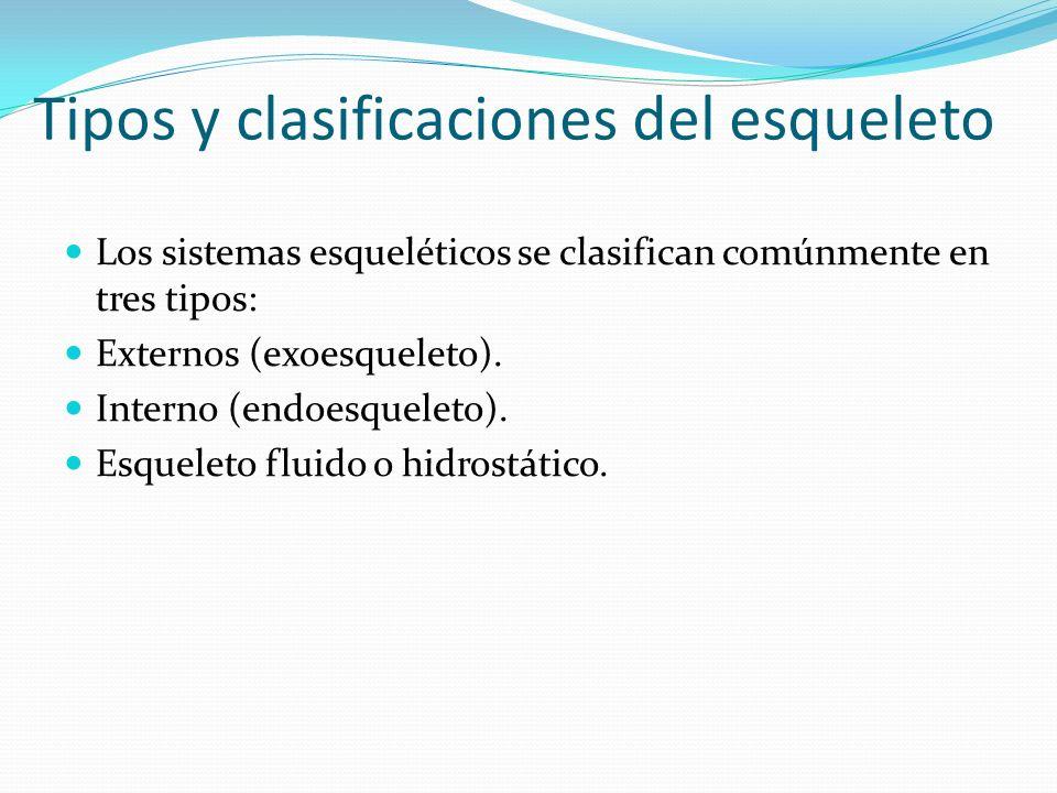 Tipos y clasificaciones del esqueleto