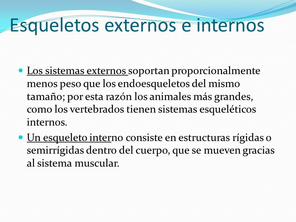 Esqueletos externos e internos