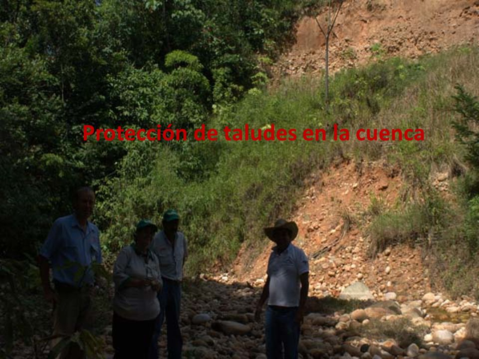 Protección de taludes en la cuenca