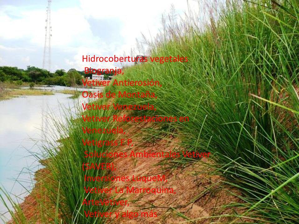 Hidrocoberturas vegetales