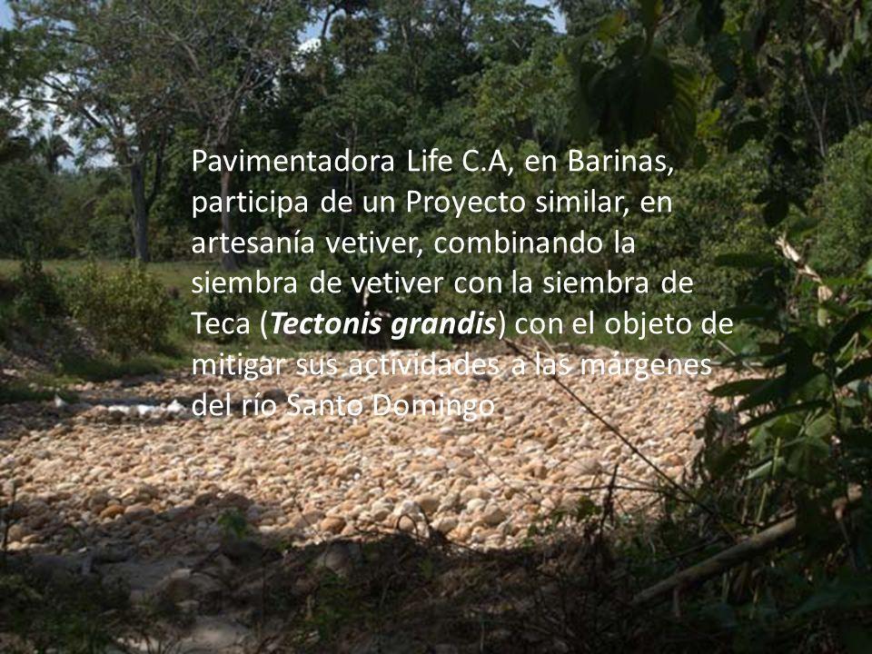 Pavimentadora Life C.A, en Barinas, participa de un Proyecto similar, en artesanía vetiver, combinando la siembra de vetiver con la siembra de Teca (Tectonis grandis) con el objeto de mitigar sus actividades a las márgenes del río Santo Domingo