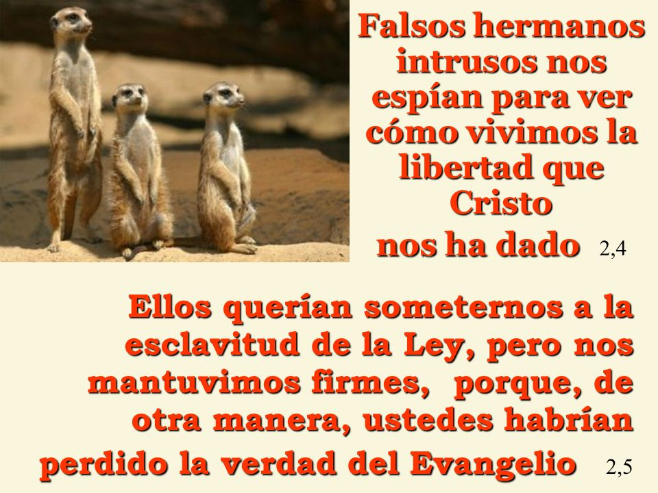Falsos hermanos intrusos nos espían para ver cómo vivimos la libertad que Cristo nos ha dado 2,4