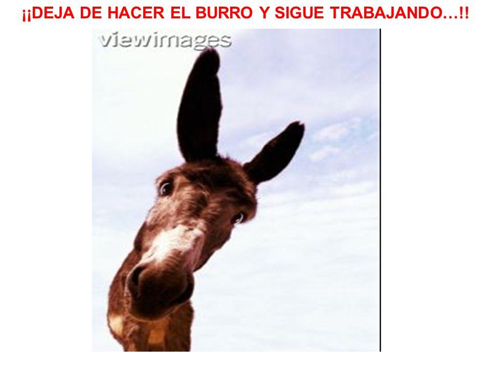 ¡¡DEJA DE HACER EL BURRO Y SIGUE TRABAJANDO…!!
