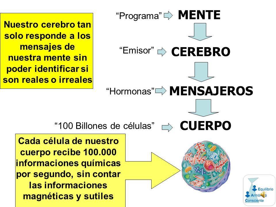MENTE CEREBRO MENSAJEROS CUERPO Programa