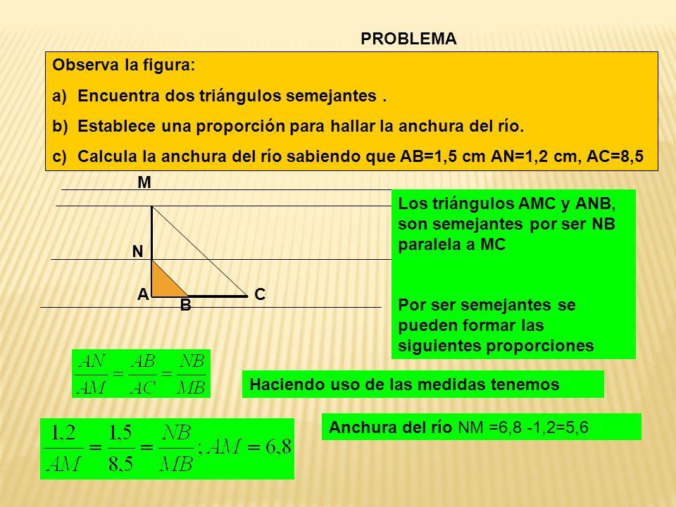 PROBLEMA Observa la figura: Encuentra dos triángulos semejantes . Establece una proporción para hallar la anchura del río.