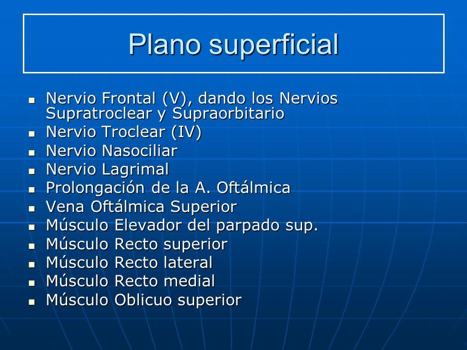 Plano superficial Nervio Frontal (V), dando los Nervios Supratroclear y Supraorbitario. Nervio Troclear (IV)