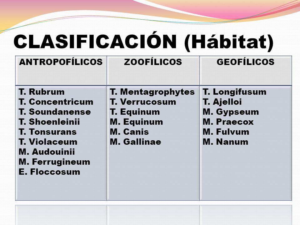 CLASIFICACIÓN (Hábitat)