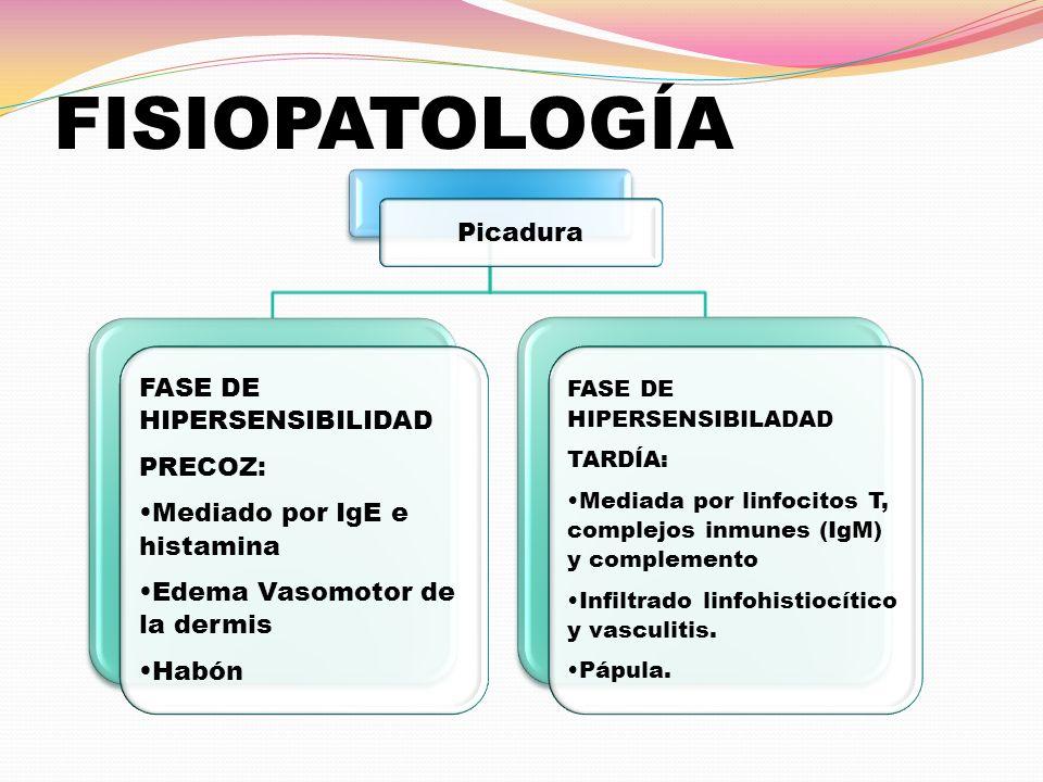 FISIOPATOLOGÍA Picadura FASE DE HIPERSENSIBILIDAD PRECOZ: