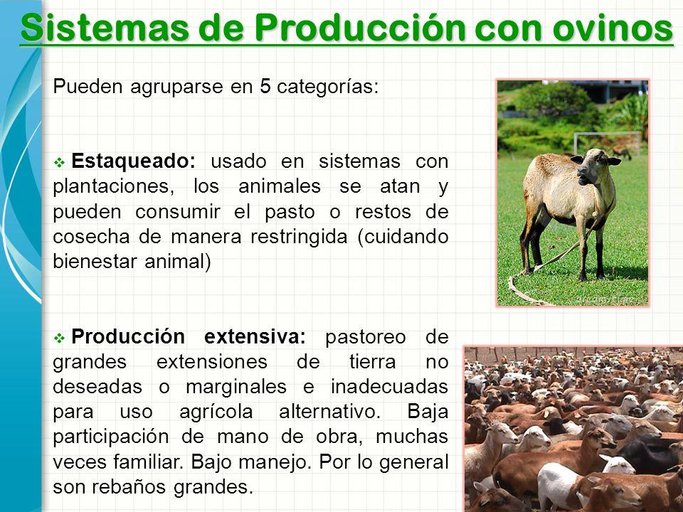 Sistemas de Producción con ovinos